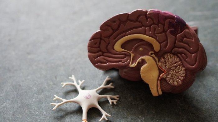 Амилоидные белки участвуют в гибели нейронов (Фото: unsplash.com).