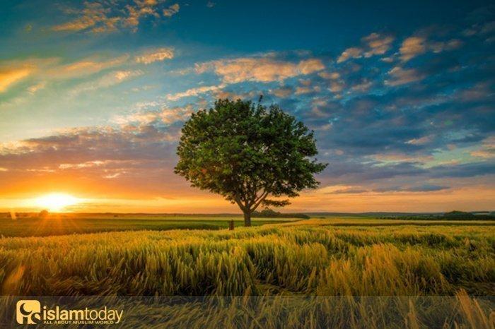 Прославление Аллаха (Источник фото: freepik.com).