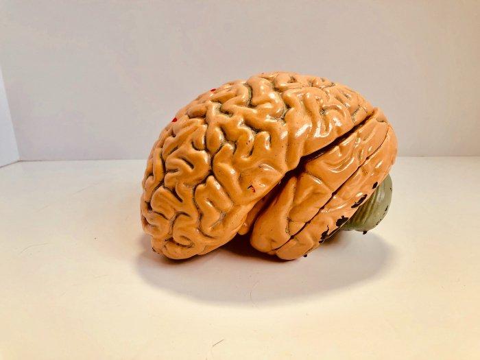 C участниками провели электроэнцефалографию мозга (Фото: unsplash.com).