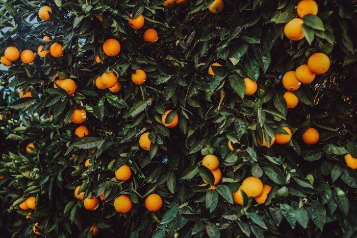 Cвежий фрукт содержит две дозы витамина С за сутки (Фото: pexels.com).