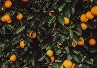 Диетолог указала на частую ошибку при употреблении популярного фрукта