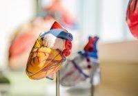Мясников перечислил неочевидные факторы развития инфаркта