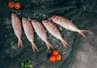 Доктор Мясников назвал самую небезопасную для здоровья рыбу