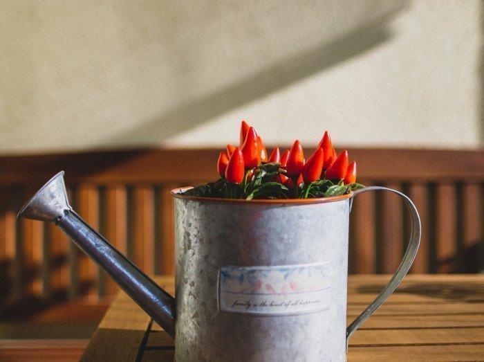 Красные перец является лучшим источником витамина С (Фото: unsplash.com).