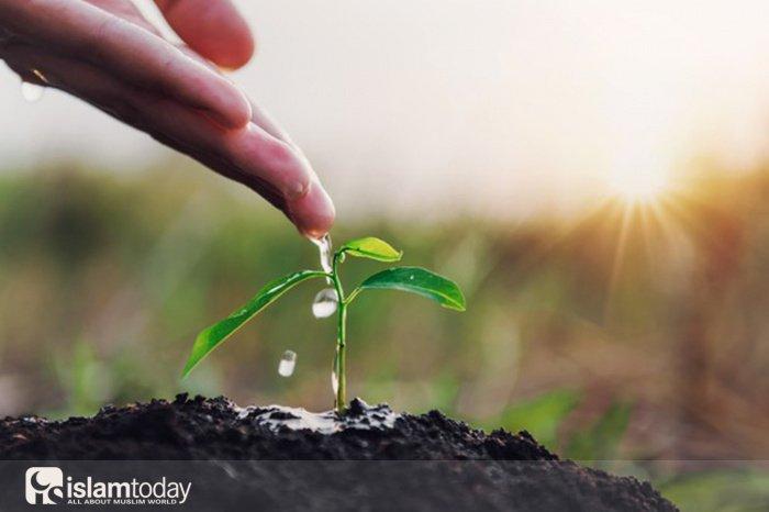 Хадисы о высаживании деревьев (Источник фото: freepik.com).