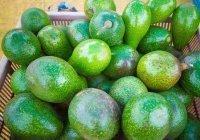 Обнаружено противораковое свойство авокадо