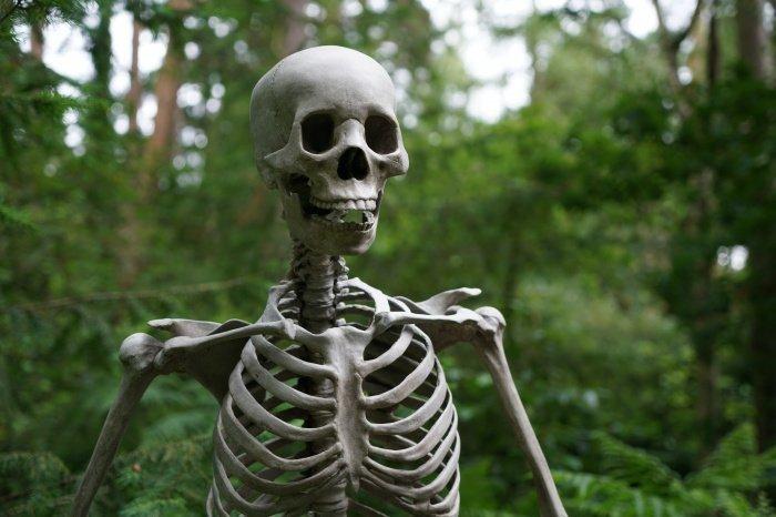 Находке порядка 78 тысяч лет (Фото: unsplash.com).