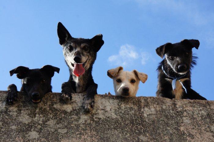 Ученые проанализировали данные порядка 9 тысяч собак более чем 20 пород (Фото: unsplash.com).