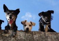 Ученые составили список самых агрессивных собак