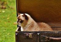 Ученые обнаружили необычную способность кошек