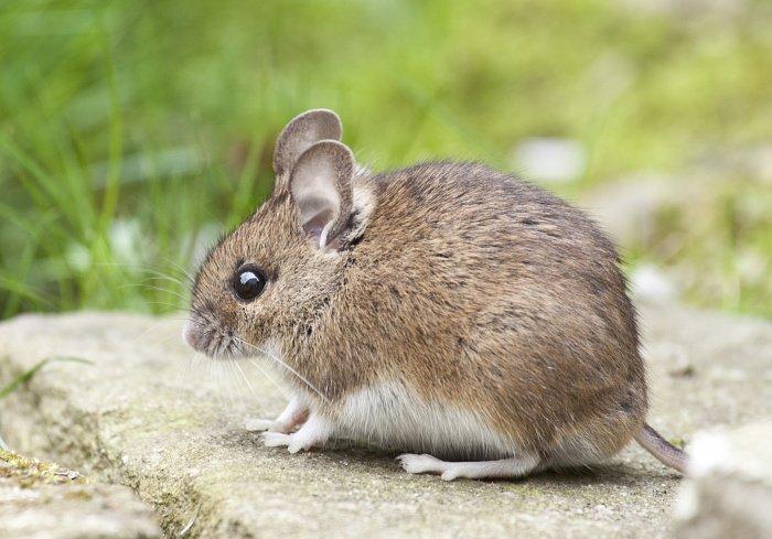 Животных будут использовать при тестировании лекарств от COVID-19 (Фото: unsplash.com).
