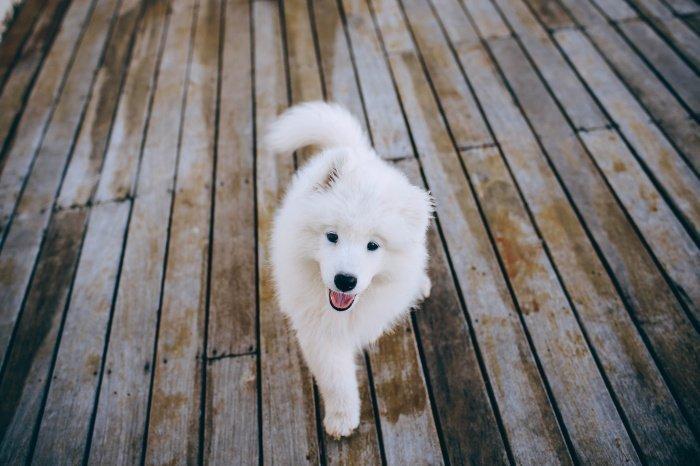 Стало известно, какие собаки реже болеют