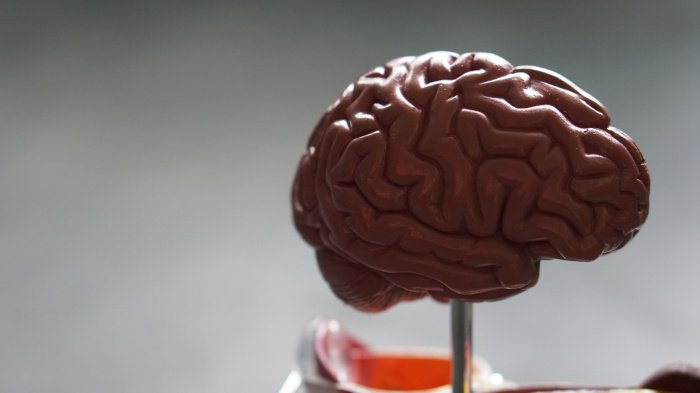 Cерое вещество играет большую роль в процессе обработки информации (Фото: unsplash.com).