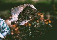 Обнаружен дешевый способ восстановления почвы после загрязнения тяжелыми металлами