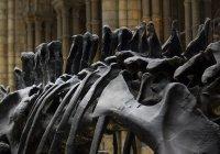 Мексиканцы обнаружили новый вид «разговорчивых» динозавров