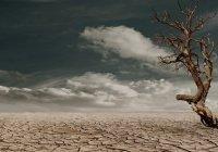 Метеорологи предупредили о приближении рекордно жаркого года