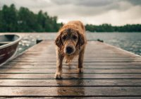 Эксперт объяснил, как распознать обезвоживание у собаки