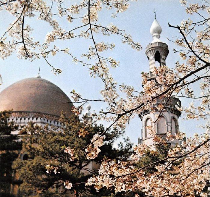 """Токийская мечеть, построенная татарами, во время цветения сакуры. Фото-вырезка из японского журнала """"Исламский культурный форум"""", 1975 год, N 3."""