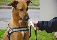 В Пакистане собак начали использовать для выявления коронавируса