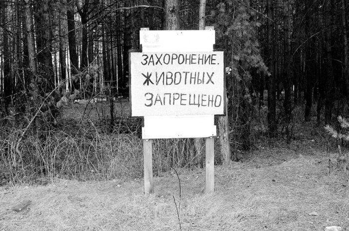 Фото: tm-courier.ru.