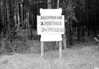 Россиянам напомнили о штрафах за похороны домашних животных