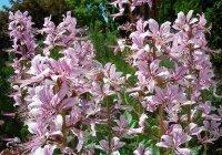 Туристов предупредили о цветении на Кавказе одного из самых опасных растений