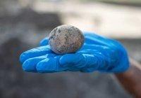 В Израиле нашли куриное яйцо возрастом 1000 лет