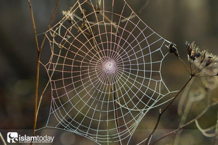 Как мог паук спасти жизнь пророка?  (Источник фото: unsplash.com).