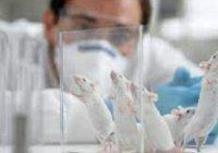 Ученые открыли универсальное средство против рака