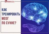 Сунна и мозг: топ-3 способа улучшить умственную деятельность