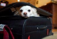 США запретили ввоз собак из России