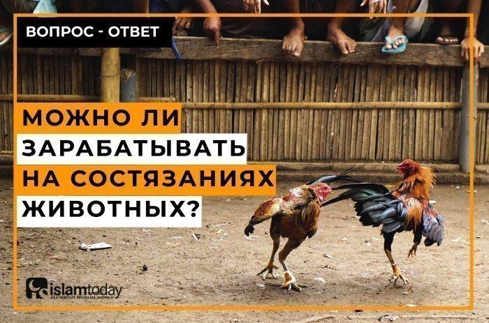 Не все животные состязания являются азартными, однако практика показывает, что большинство из них считаются таковыми. (Фото: elements.envato.com)