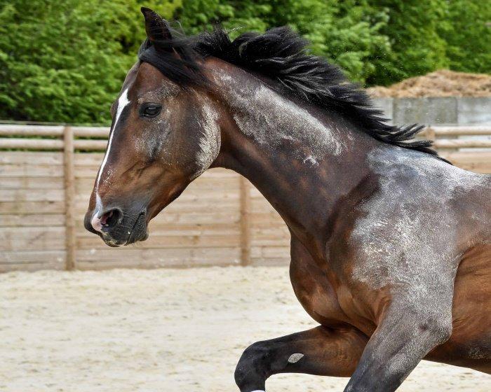 Не все состязания, где задействованы животные являются азартными (Фото: pixnio.com).