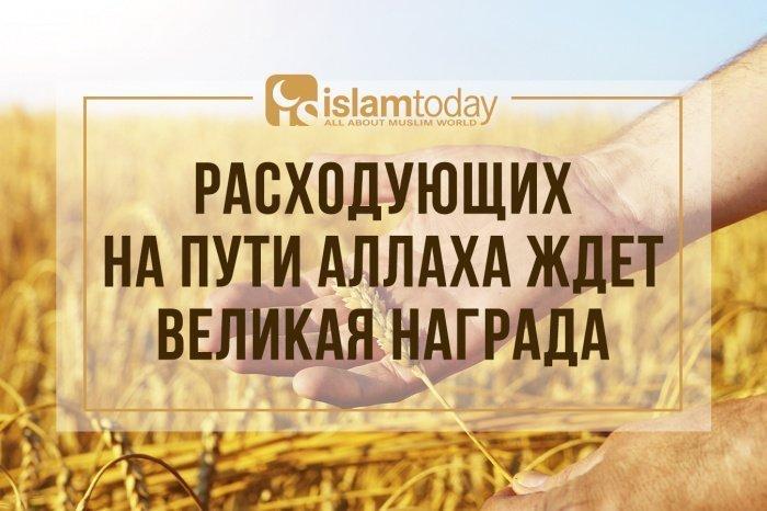 Те, кто расходует свое имущество на пути Аллаха, подобны зерну, из которого выросло семь колосьев, в каждом колосе по сто зерен (Фото: elements.envato.com)