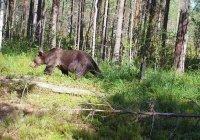 Ученый объяснил, как выжить при встрече с медведем