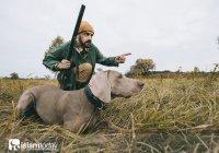 Дозволена ли добыча, пойманная охотничьей собакой?