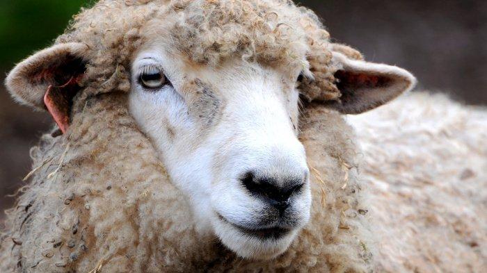 Ибрахиму (а.с.) выпало великое испытание под названием «Курбан» (Фото: bbc.com).
