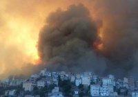 Не менее 25 военных погибли в Алжире при тушении лесных пожаров