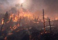 В Алжире – траур по жертвам лесных пожаров