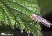 Зачем Всевышний Аллах упоминает в аятах насекомых?