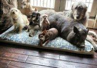 В России ограничат количество живущих в квартире животных