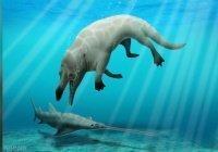 В Египте нашли останки «ходячего» кита возрастом 43 млн лет
