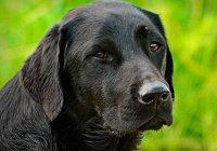 Учёные выяснили, что собаки могут отличать умышленные и случайные действия