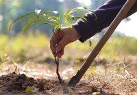В Балтасинском мухтасибате высадят 1100 деревьев к юбилею принятия ислама