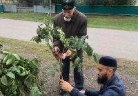 В Муслюмово посадили деревья в честь 1100-летия принятия ислама