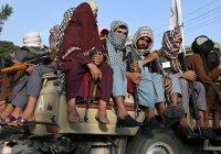 «Талибан» проведет «чистку рядов» среди боевиков