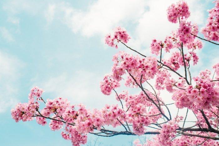 «...Всевышний Аллах удалил ее шипы и заменил их плодами...».