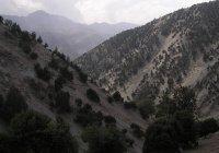 В Афганистане запретили вырубку леса
