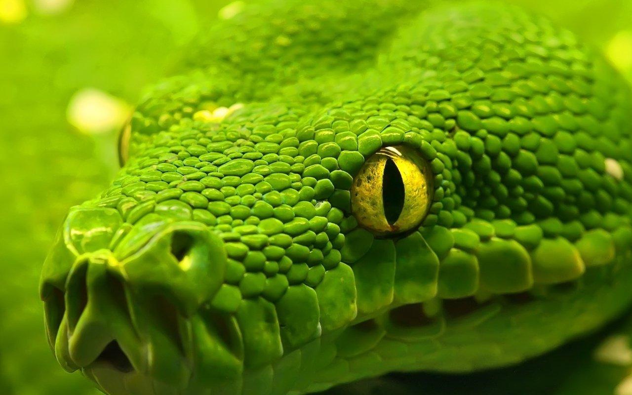 Можно ли убивать комаров, змей, крыс?