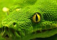 Можно ли убивать комаров, змей, крыс по Исламу?